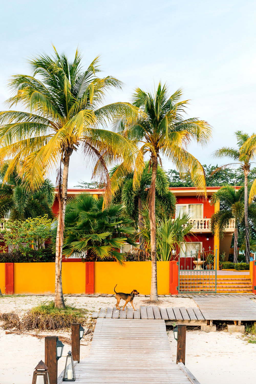 Aruba 2017 Downtown_-6 copy.jpg