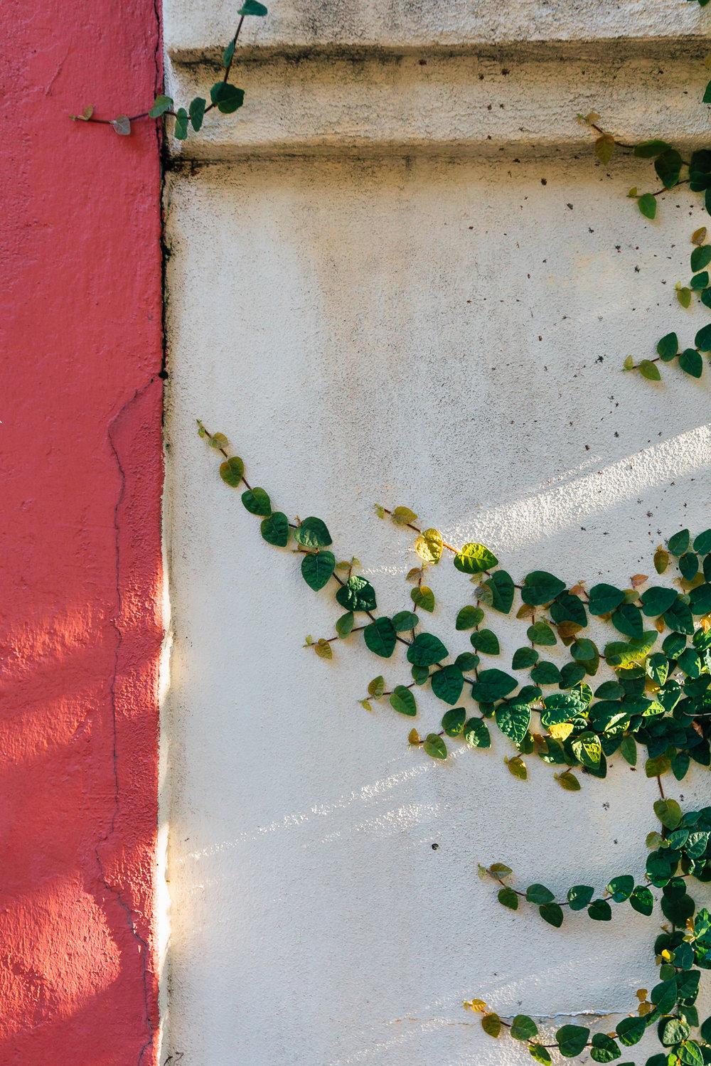 Nico Schinco - Charleston 2017-43.jpg