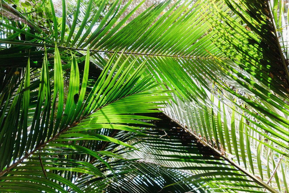 NS_San_Diego_Zoo-7.jpg