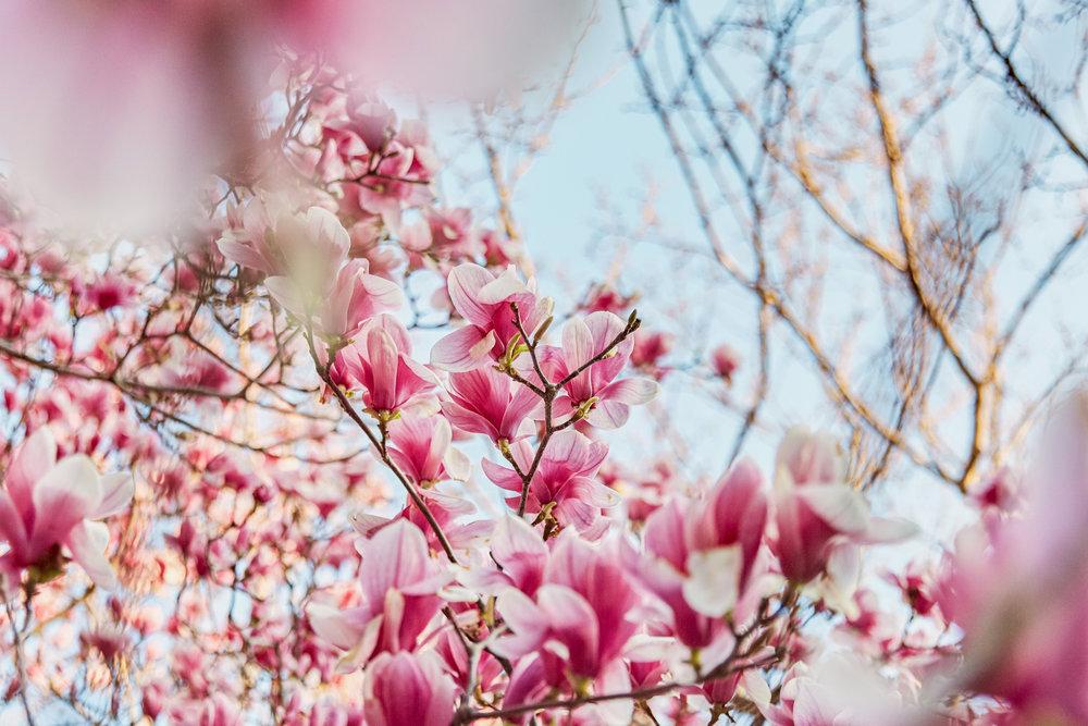NS_NYC_Spring_2018 copy.jpg