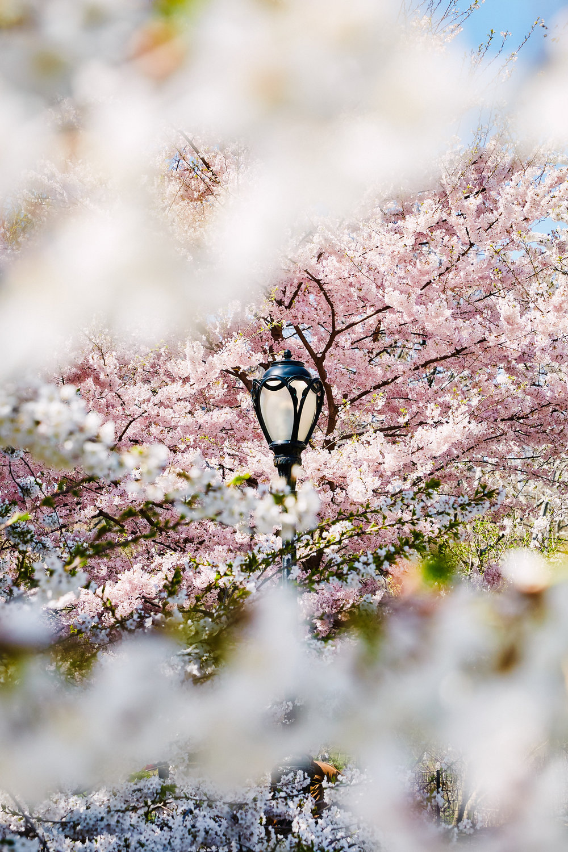 NS_NYC_Spring_2018-6.jpg