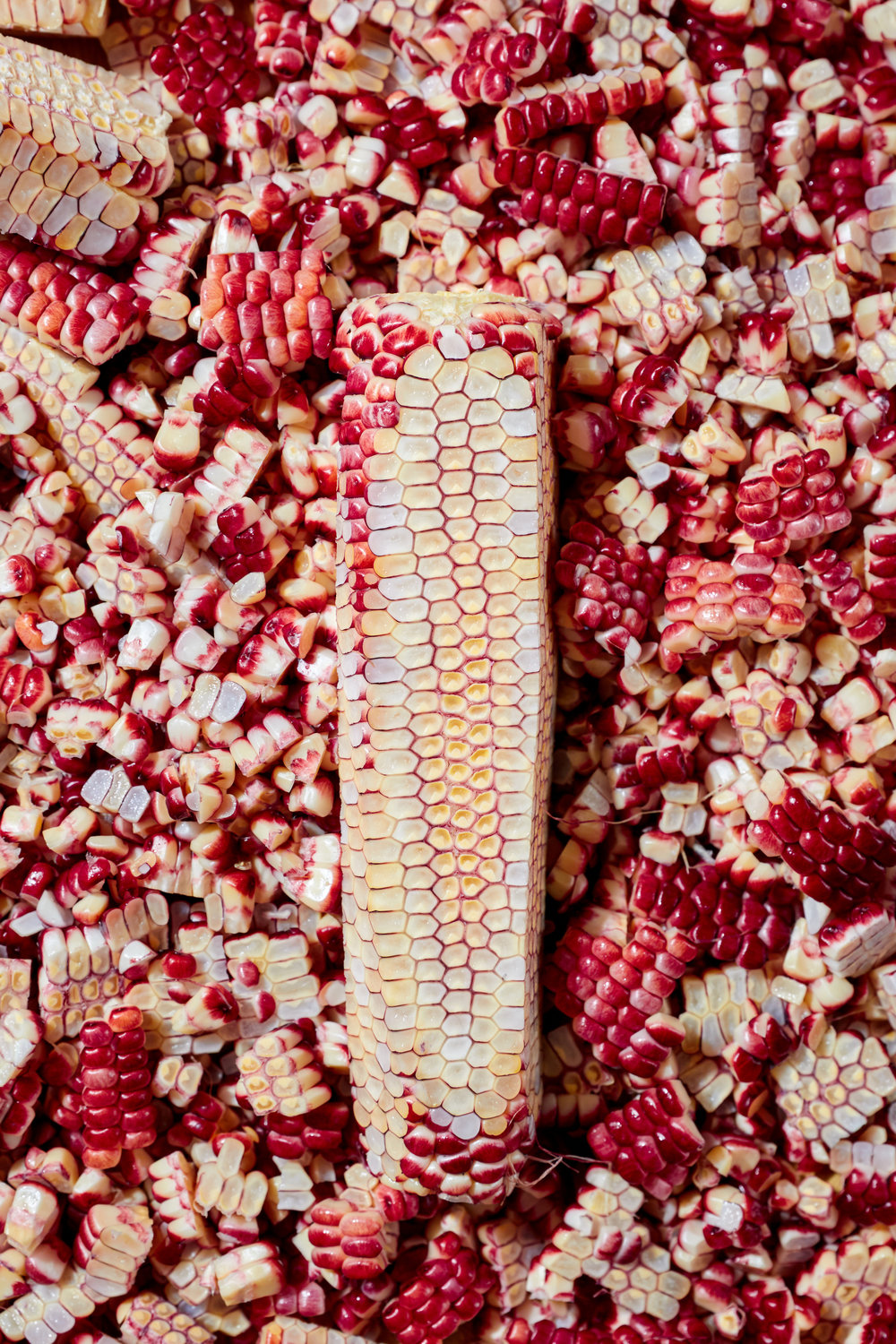 NS_Ruby_Red_Corn 6.jpg