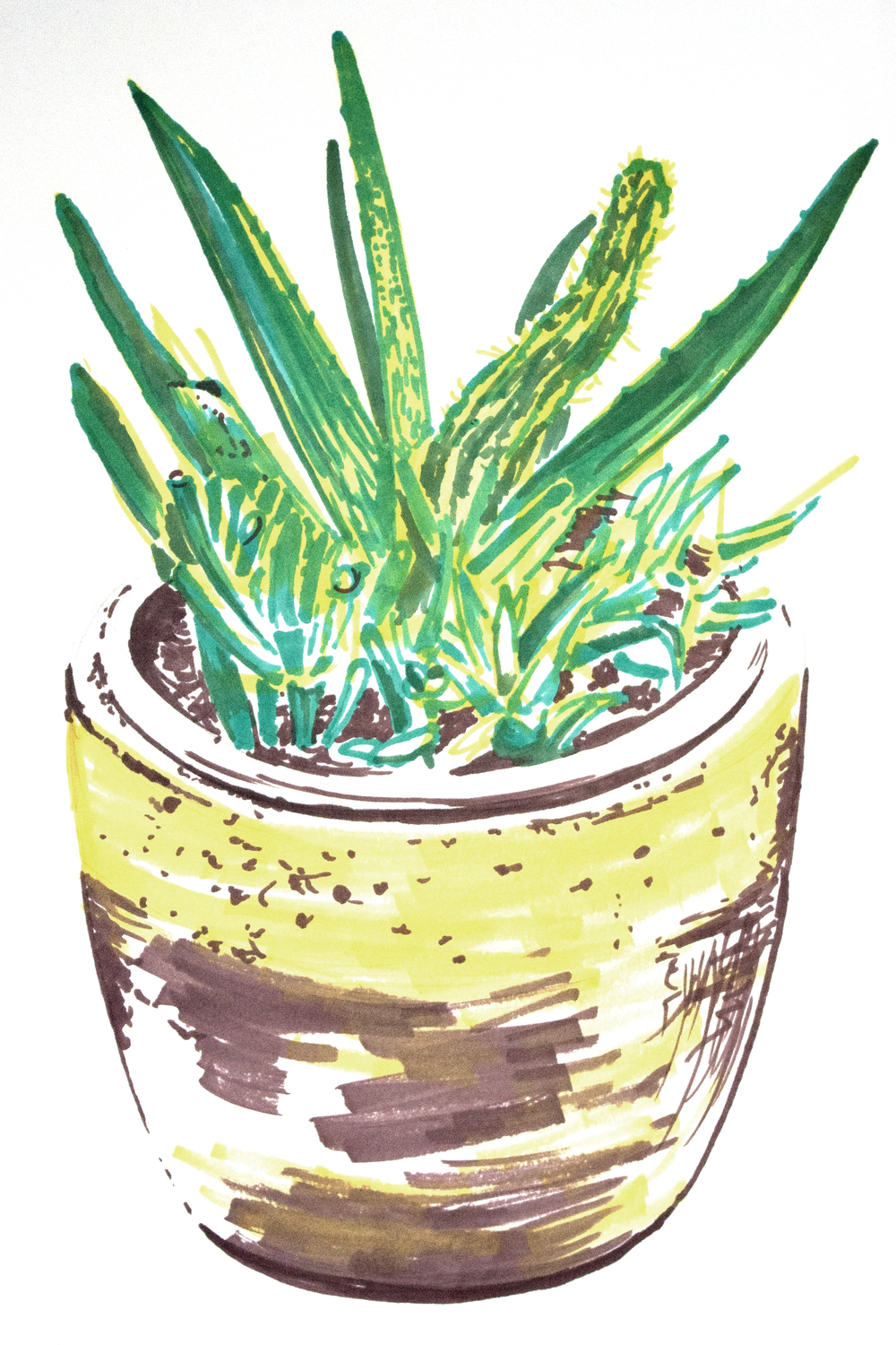 Succulents-Drawing2.jpg
