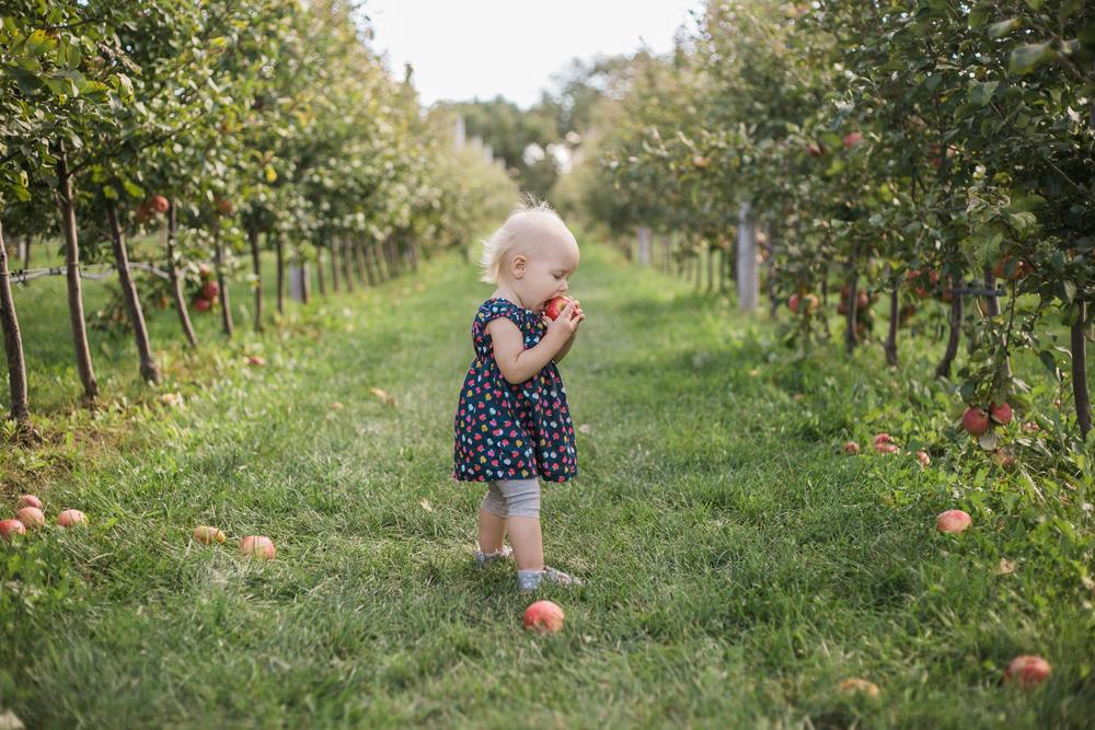 vanessa wyler photographer pewaukee wisconsin apple orchard