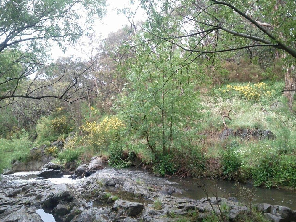 our creek.jpg
