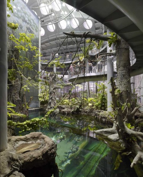 Inside the Rainforest