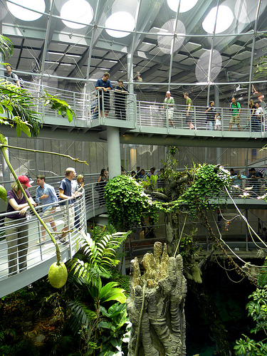 rainforest (1).jpg
