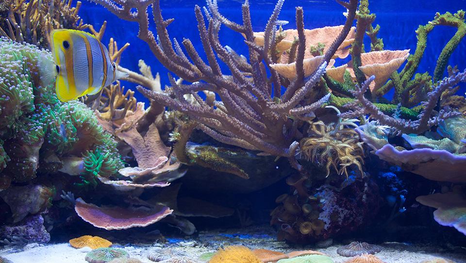 CAS_Steinhart_Aquarium_small_coral_tank.jpg