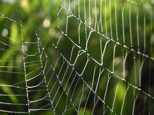 spider-webs-386980_640.jpg