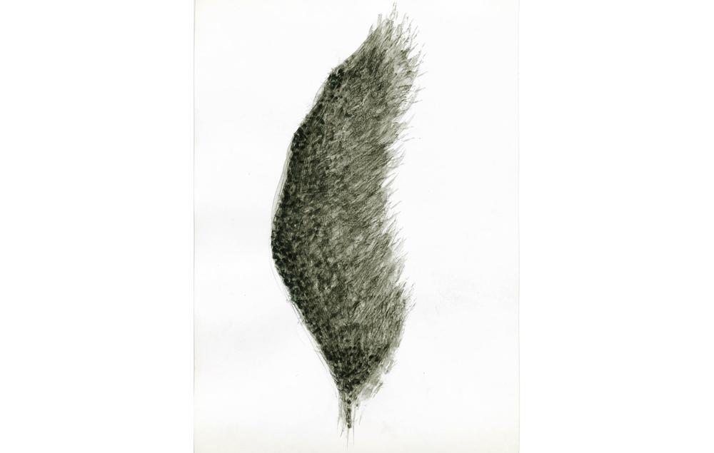 tintas chinas plumas (7).jpg