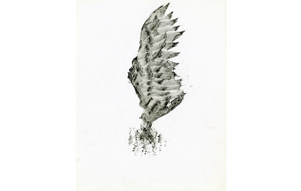 tintas chinas plumas (6).jpg