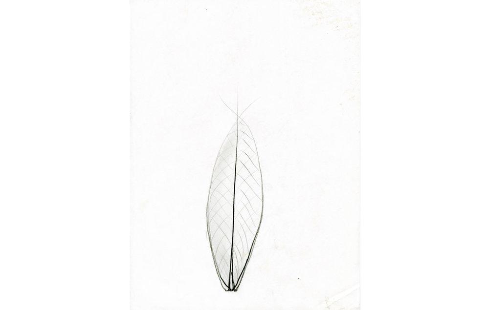 grafito sobre papel (11).jpg