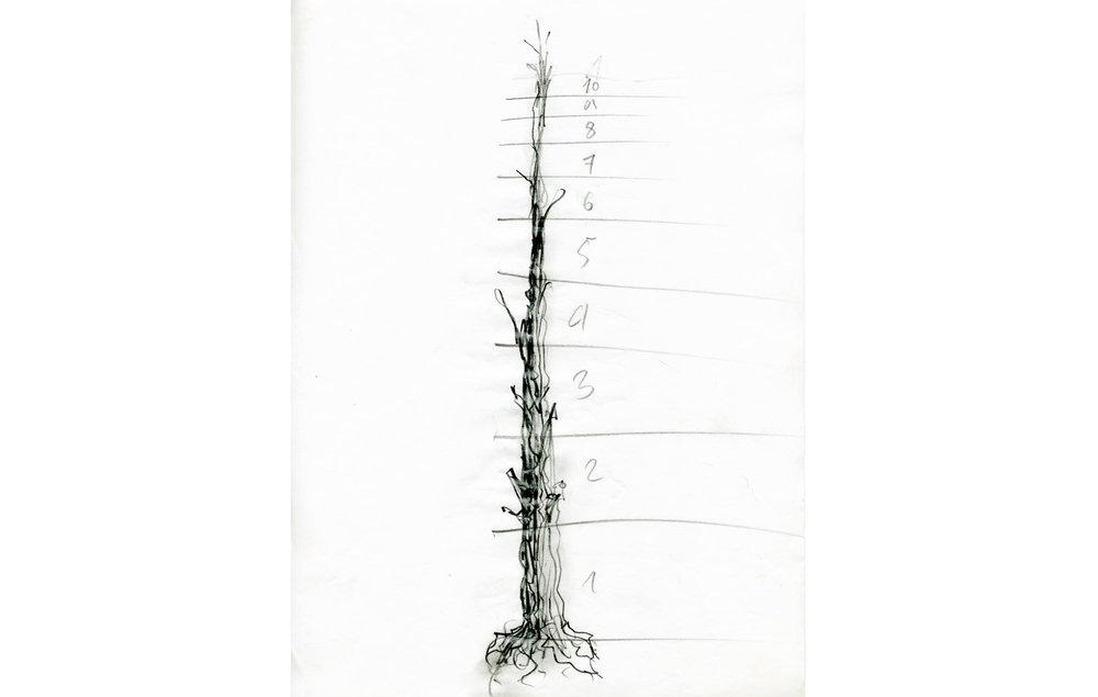 grafito sobre papel (52).jpg