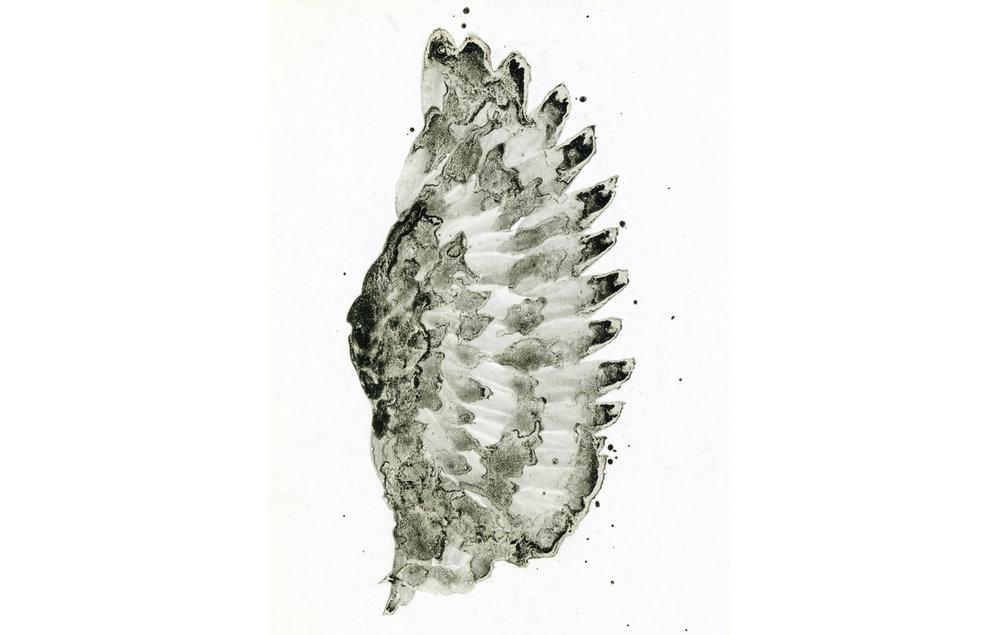 tintas chinas plumas (3).jpg
