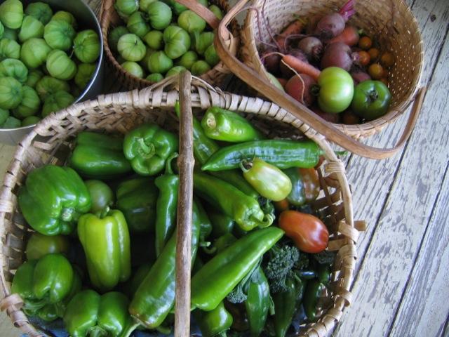 garden veg photo.jpg