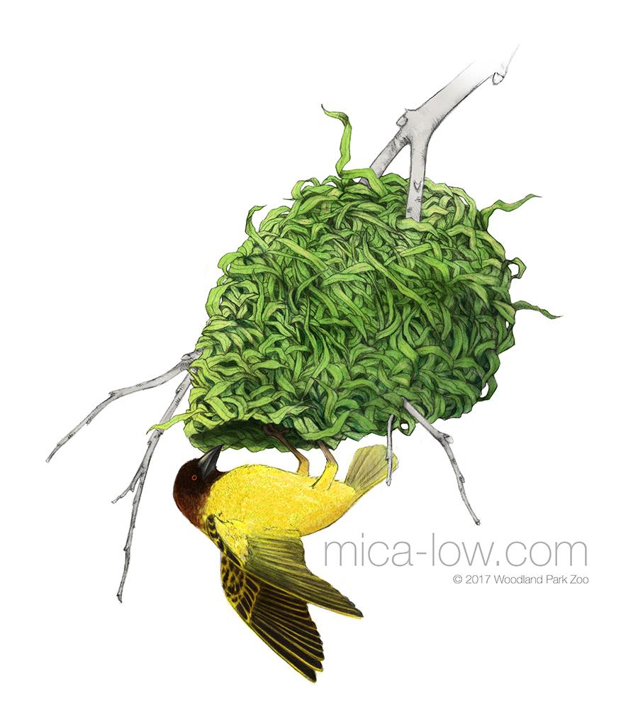 Weaver Bird II