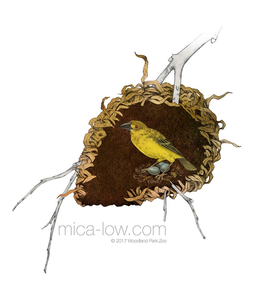 Weaver Bird III
