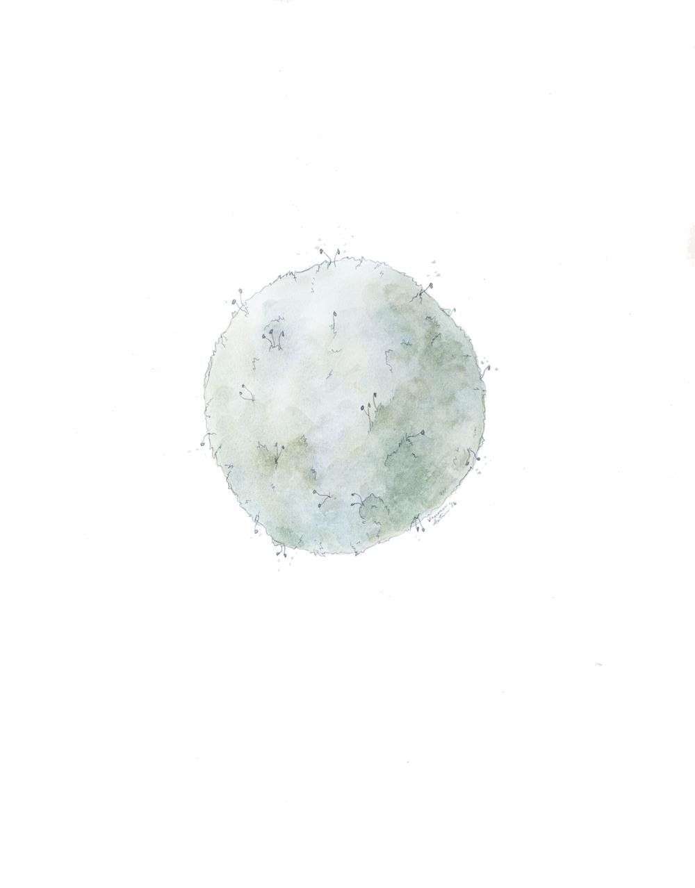Moss ball.jpg