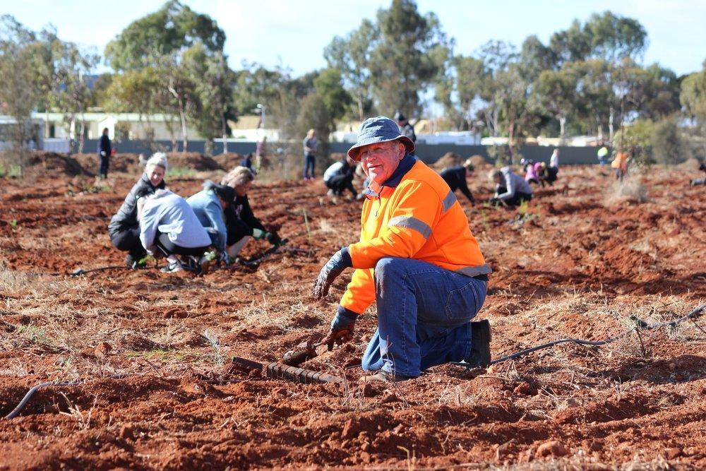 KCGM volunteer lending a hand during Kalgoorlie-Boulder Urban Landcare Group's tree planting day.