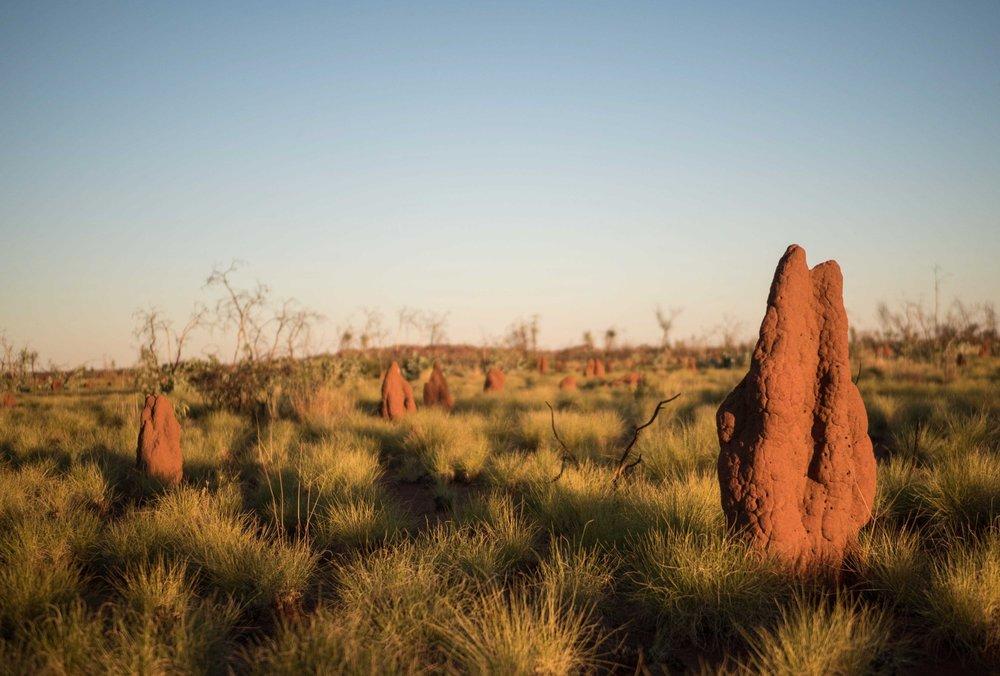 The Tanami Desert in Australia's Northern Territory. Credit: Ben Nichols @rockpoolphotography.