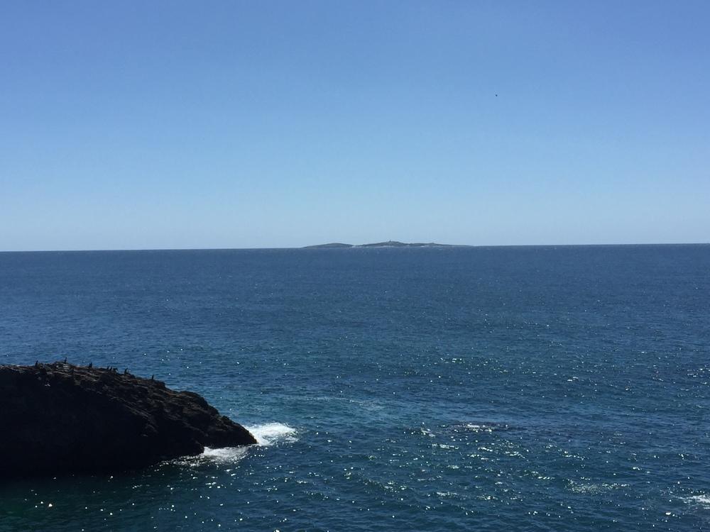 Montague Island.JPG
