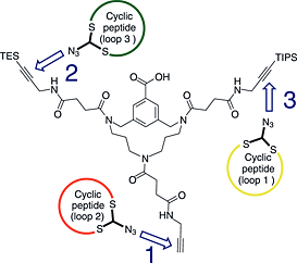 Using an orthogonally protected three alkyne derivative of the triazacyclophane scaffold, three different azido functionalized cyclic peptides were introduced successively affording a discontinuous epitope mimic of the pertactin protein of Bordetella pertussis in a convergent way.