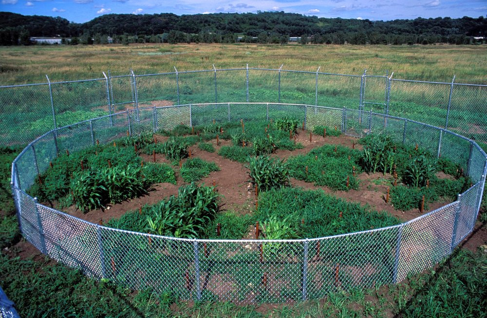 Mel Chin's  Revival Field , 1991, Pig's Eye Landfill, near St. Paul, Minnesota. All images courtesy Walker Art Center Library and Archives