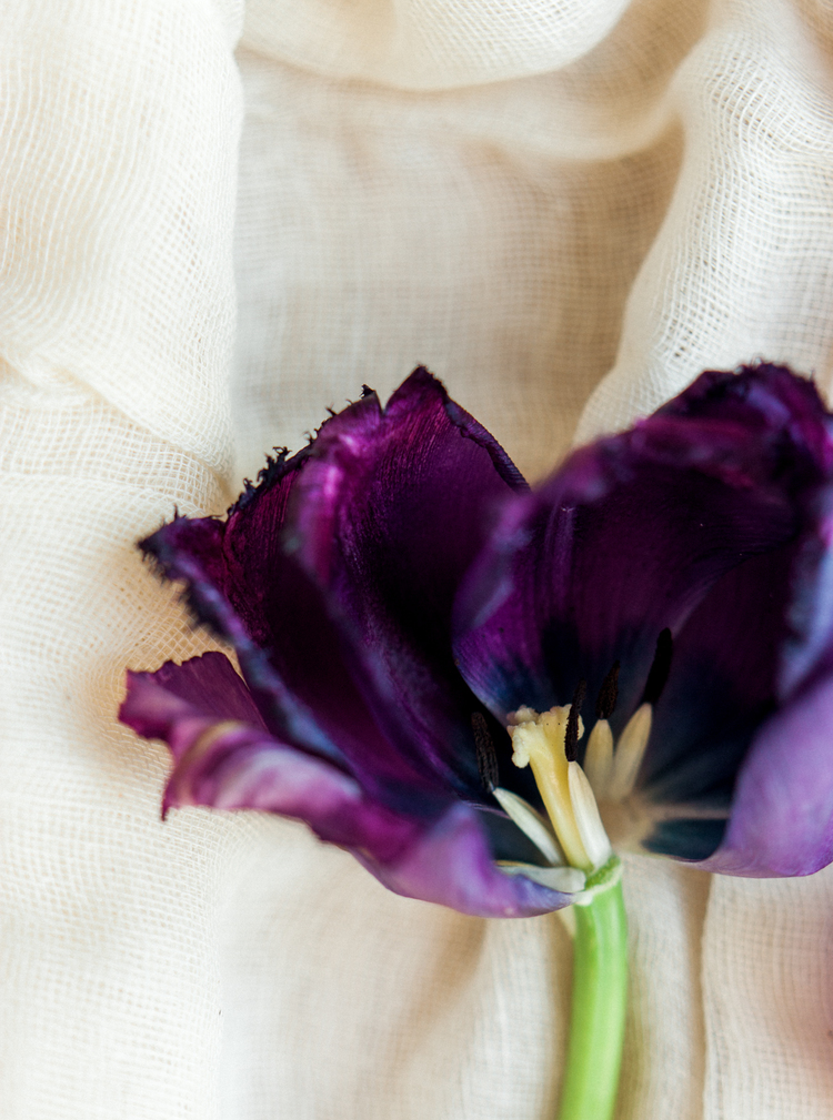 flowers_tulips_purple_celine_chhuon (1).JPG