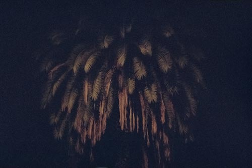 Palm Tree, 2015  Fine Art Print, 80 x 120 cm, Edition 10 //  Available . 1300 Euro