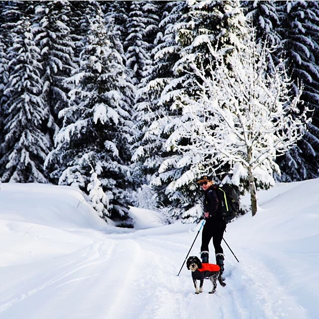 It's not a walk in the park running La Ferme... but sometimes it's a walk in the woods! 📸@louby_faure and Tipsy, two of the La Ferme's super experienced team exploring the mountain. 🌲❄️🐶