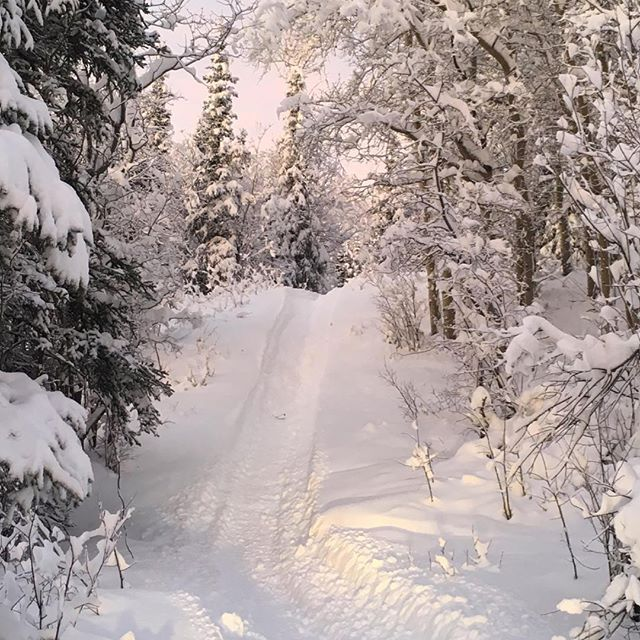 The trail up to the cabin. Photo by @cabinlife_alaska #pnwonderland