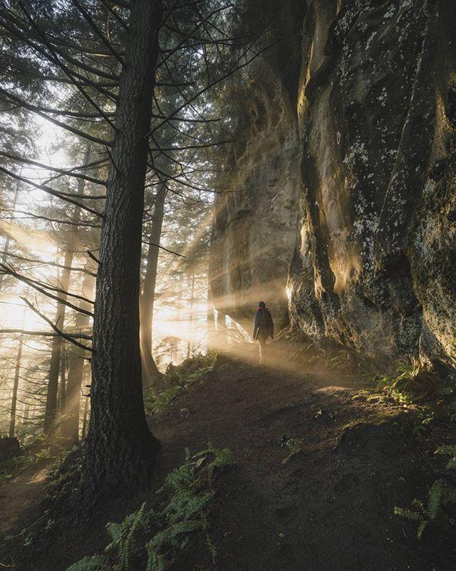 That perfect light. Photo by @rorym.photo #pnwonderland
