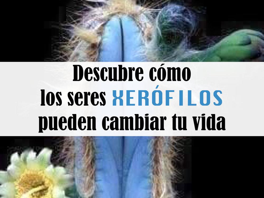 Imagen 'Blue cactus'