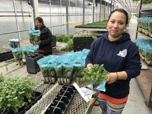 Suzanna Flores has worked full-time at Heartland Growers for eight years.