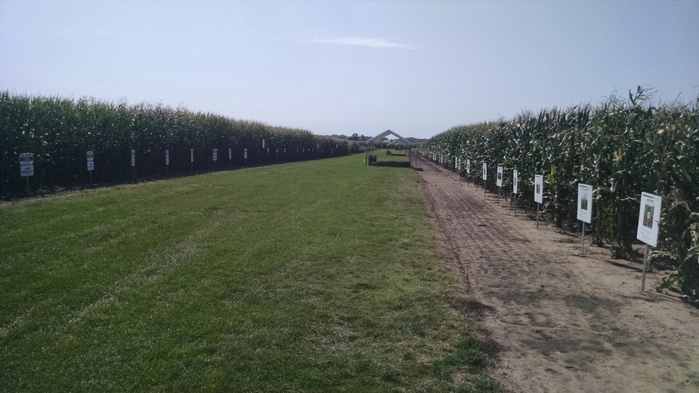 Pioneer show fields
