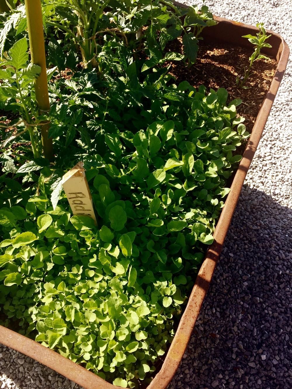 garden2 copy.jpg