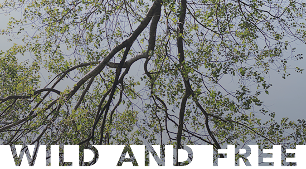 Wild and free - Walden Literary Magazine First Edition - Online Version / Purchase book