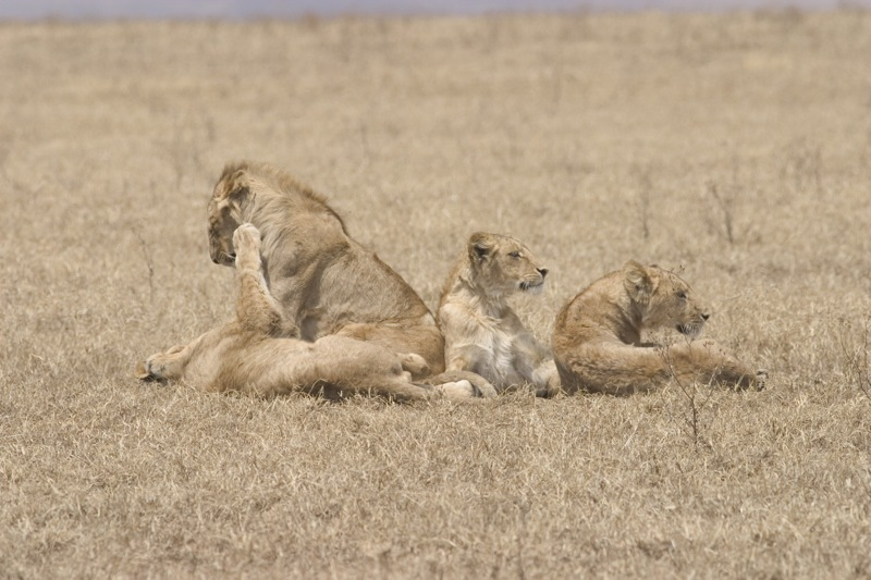 lion pile 3.jpg