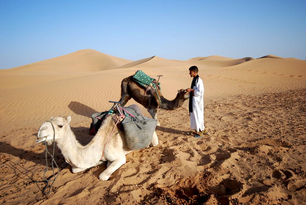 Sahara Desert / Morocco