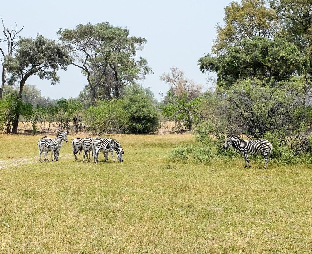 Vumbura Concession / Okavango Delta / Botswana