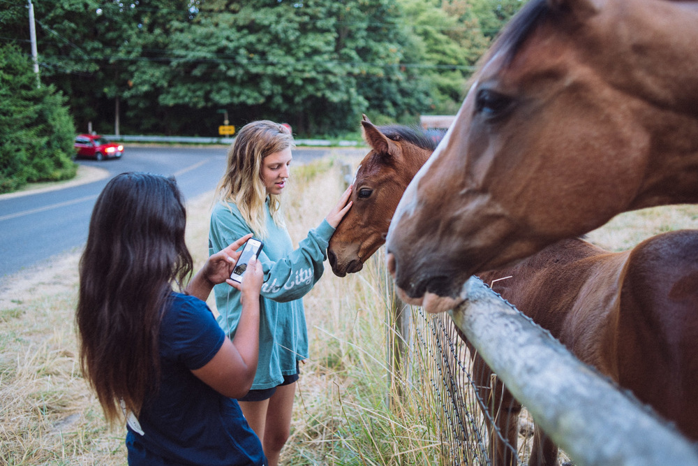 Alex meeting horses on an evening stroll