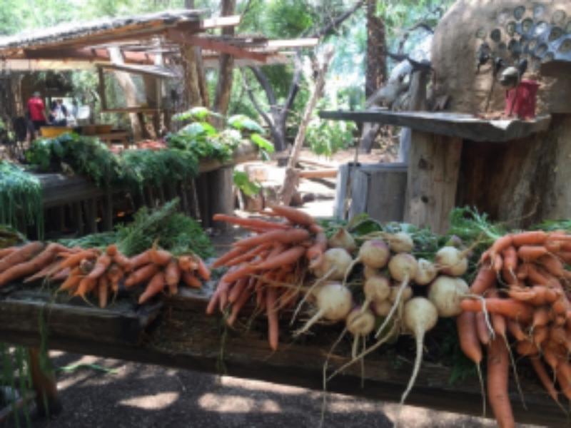 Singh Farms, Scottsdale, AZ
