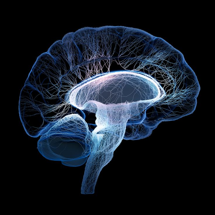 19f35157dd3e3de805ebcdea209704a4--brain-facts-the-brain.jpg