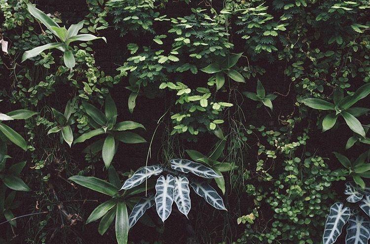 blomvägg2.jpg