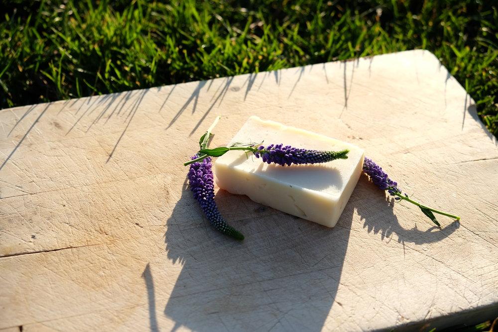 2. Lavender outside DSCF2484.JPG