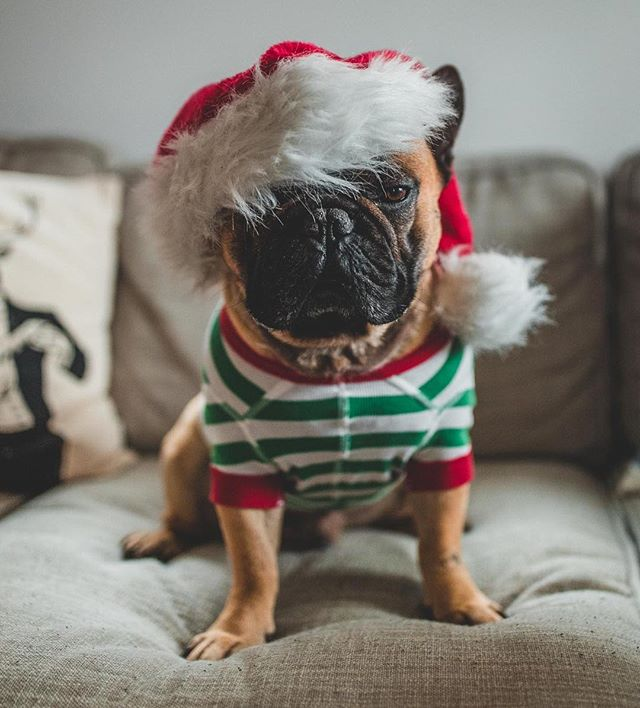 """""""When will they stop thinking it's cute to dress me up on every holiday?"""" 🎅🏼🎄#hannajams #christmas #overit"""