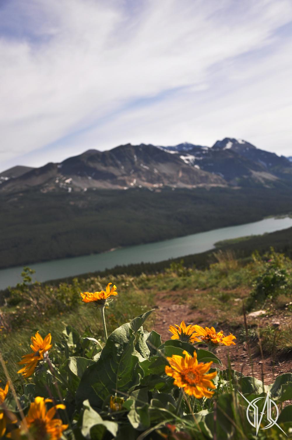 Montana03.jpg