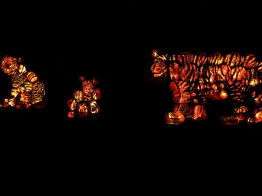 halloween-pumpkins-2.jpg