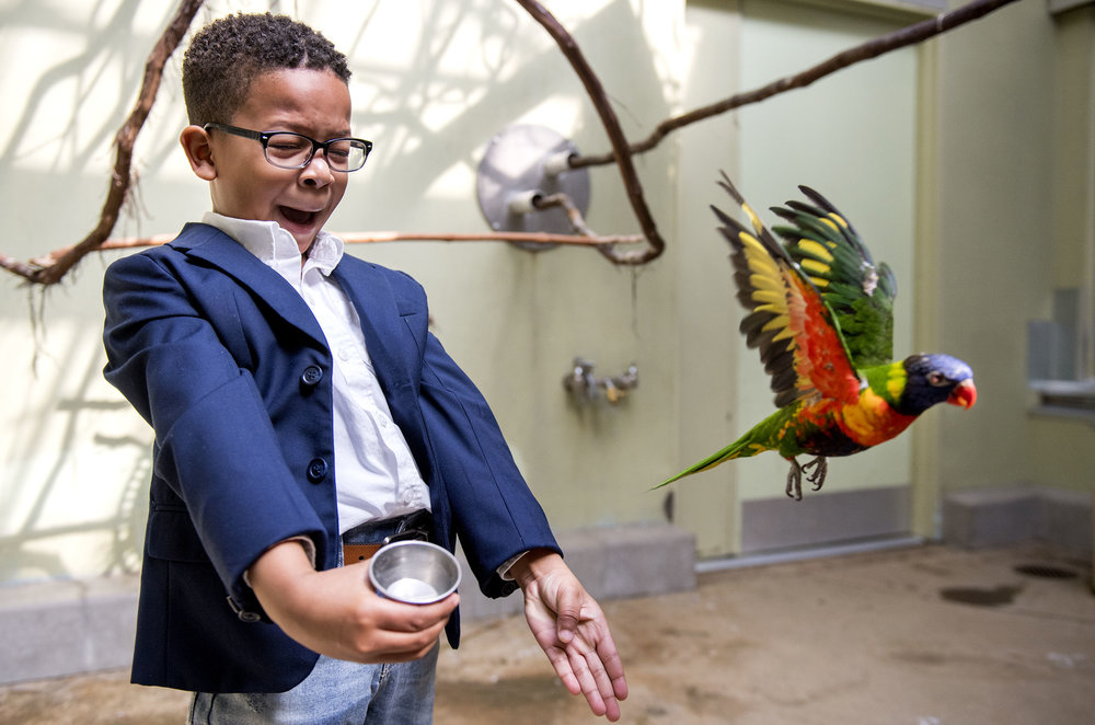 David Morgan, 5, of McKeesport, screams as a rainbow lorikeet flies away from him after trying to gain confidence to feed the bird on Sunday, April 1, 2018 at the National Aviary in North Side.