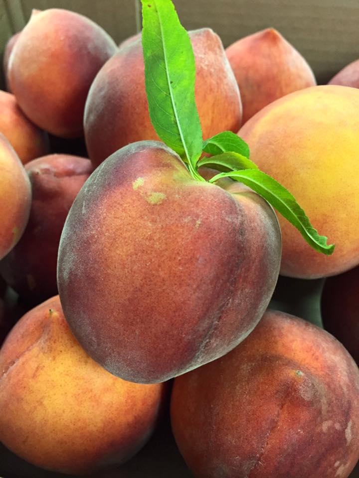 Peach 1.jpg